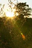 Briljant glänsande ljus bak skoglövverk i en äng arkivbilder