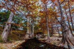 Briljant orange Cypress lövverk som fodrar en klar kristall - strömma. Fotografering för Bildbyråer
