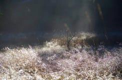 Briljanta droppar av dagg backlits av den ljusa vintersolen i ett fält Royaltyfria Foton