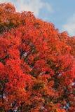 Briljanta färger av hösten Royaltyfria Bilder