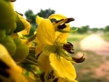 Briljante gele bloemen Mooie bloem op het bos Stock Foto's