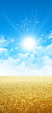 Brillant comme le blé au soleil images libres de droits