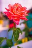Brillante hermoso de la flor fresca Fotos de archivo
