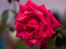 Brillante hermoso de la flor fresca Fotografía de archivo