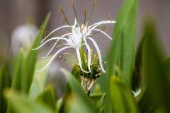 Brillante hermoso de la flor fresca Imagen de archivo libre de regalías