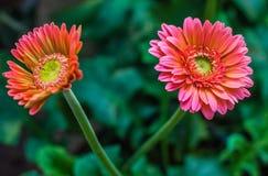 Brillante hermoso de la flor fresca Imagenes de archivo