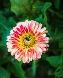 Brillante hermoso de la flor fresca Foto de archivo