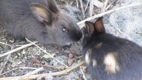 Brillante-mirada de los conejos de conejito jovenes lindos preciosos dulces que comparten un pedazo de veggies el parque Canadá d almacen de video