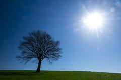 Briller et arbre du soleil sur un pré vert un paysage rural vibrant photographie stock libre de droits