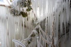 briller léger par des glaçons accrochant sur des branches d'arbre en temps froid extrême photographie stock