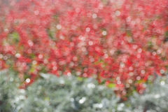 Brillez en cercles de flou, bokeh defocused de rayons de soleil Texture rouge et verte, fond Photographie stock