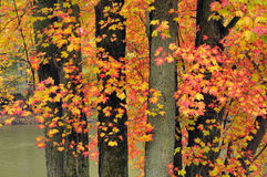 Brilliant autumn colors Royalty Free Stock Photography