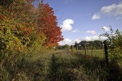 Brilliant autumn colors Stock Photos