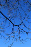 Brilliant blue skies with tree branches and remaining leaves Stock Photography