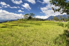 Brilliant blue sky and Rice Terrace. Blue sky over the Golo Cador Rice Terraces in Ruteng on Flores, Indonesia royalty free stock images