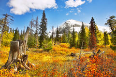 Brilliant colors of autumn Royalty Free Stock Photo