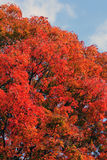Brilliant colors of Autumn Royalty Free Stock Images
