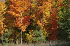Brilliant colors adorn autumn foliage in New England. Brilliant colors adorn foliage in autumn along the roads in New England royalty free stock image