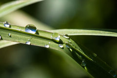 Brilliant drops of dew or rain on the grass Stock Image