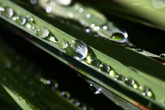 Brilliant drops of dew or rain on the grass Royalty Free Stock Photo
