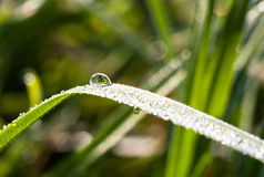 Brilliant drops of dew or rain on the grass Royalty Free Stock Image