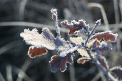 Brilliant and fabulous frost Royalty Free Stock Image