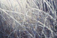 Brilliant and fabulous frost Royalty Free Stock Photos