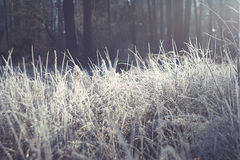 Brilliant and fabulous frost Royalty Free Stock Photo