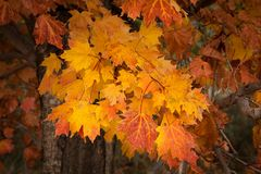 Fall Radiance in Acadia National Park stock photo