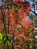 Brilliant Fall Colors - Appalachian Forest Autumn Foliage. Brilliant Fall Colors - Appalachian Forest in Autumn. Trees changing color from green to brilliant stock photography