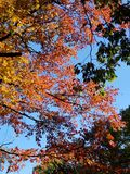 Brilliant Fall Colors - Appalachian Forest Autumn Foliage. Brilliant Fall Colors - Appalachian Forest in Autumn. Trees changing color from green to brilliant royalty free stock photography