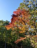 Brilliant Fall Colors - Appalachian Forest Autumn Foliage. Brilliant Fall Colors - Appalachian Forest in Autumn. Trees changing color from green to brilliant stock images