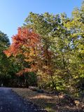 Brilliant Fall Colors - Appalachian Forest Autumn Foliage stock photography