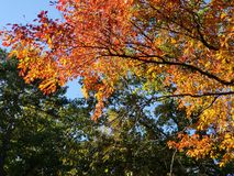 Brilliant Fall Colors - Appalachian Forest Autumn Foliage. Brilliant Fall Colors - Appalachian Forest in Autumn. Trees changing color from green to brilliant stock photo