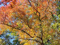 Brilliant Fall Colors - Appalachian Forest Autumn Foliage royalty free stock image