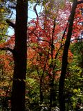 Brilliant Fall Colors - Appalachian Forest Autumn Foliage. Brilliant Fall Colors - Appalachian Forest in Autumn. Trees changing color from green to brilliant royalty free stock photo
