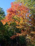 Brilliant Fall Colors - Appalachian Forest Autumn Foliage. Brilliant Fall Colors - Appalachian Forest in Autumn. Trees changing color from green to brilliant royalty free stock image