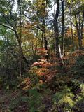 Brilliant Fall Colors - Appalachian Forest Autumn Foliage. Brilliant Fall Colors - Appalachian Forest in Autumn. Trees changing color from green to brilliant stock photos