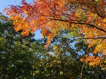 Brilliant Fall Colors - Appalachian Forest Autumn Foliage stock photos