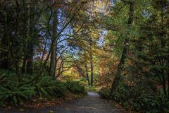 Colorful Autumn Path Stock Photography