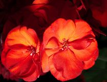 Brilliant flowers. They pulling my eyes of the head royalty free stock images