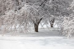 Ice Storm Royalty Free Stock Photo