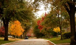 Brilliant multicolor autumn trees line neighborhood street with colored leaves. Blowing and scattered Royalty Free Stock Image