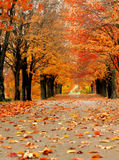 Brilliant Orange Backroad. Roadway is littered with fallen orange leaves. Autumn overhangs roadway with orange and gold. Dark tree trunks stock photography