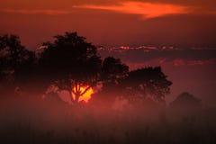 Brilliant orange sunlight illuminates the clouds and grasslands Okavango Delta Stock Images