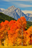 Brilliant orange trees and snow capped mtns. Stock Image