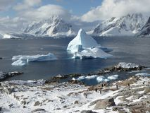 Brilliant Petermann Island, off the Antarctic Peninsula hosts a number of Gentoo penguins. Petermann Island is a frigid Antarctic wonderland, full of icebergs Stock Photo