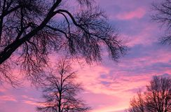 Brilliant Sunrise with deciduous trees in silhouette in the foreground. A brilliant purple, peach, coral, pink and lavender sunrise with deciduous trees in Stock Photography