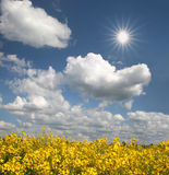 Brilliant rape field. With sun at a sky with clouds Stock Images