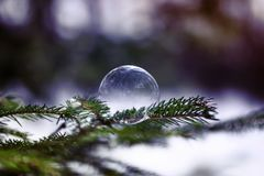 Soap bubble shimmers and lies on the green needles of. A brilliant soap bubble shimmers and lies on the green needles of fir-tree branches in the woods royalty free stock photo